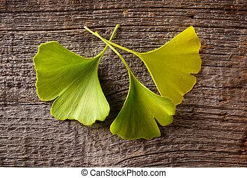 Gingko biloba fresh leaves on wooden board