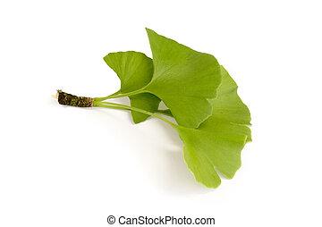 Gingko Leaves - Three fresh gingko leaves - isolated on ...