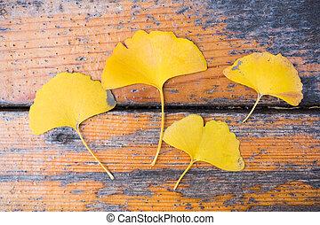 Gingko yellow leaves on wood