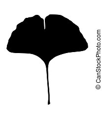 ginkgo の葉