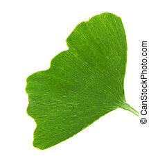 ginkgo の葉, biloba