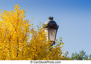 Ginkgo biloba branches with autumn leaves against streetlight and sky