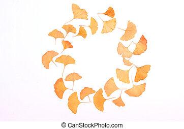 Ginkgo Biloba leaves herbarium - Ginkgo Biloba leaves round ...
