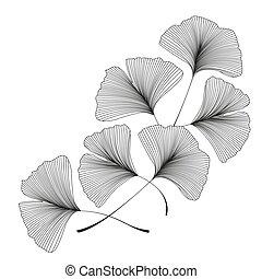 Ginkgo biloba leaves - Vector illustration of ginkgo biloba...