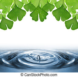 ginkgo biloba leaves with dew drops above the water level