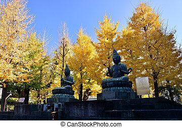 ginkgo boom, op, sensoji, tempel