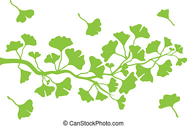 ginkgo tree branch with green leaves, vector background