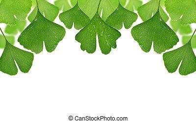 ginkgo, hojas, biloba