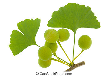 Ginkgo leaf isolated over white