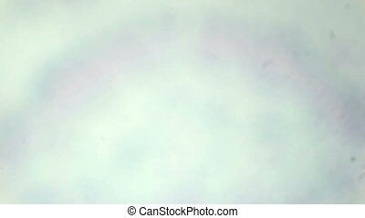 Ginkgo leaf slice under the microscope (Ginkgo leaf C.S.),...