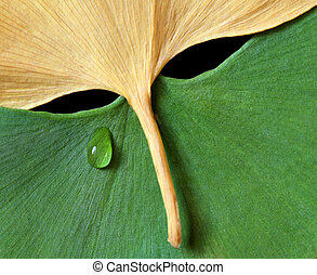 Ginkgo Leaves in mask form with tear drop - copy space