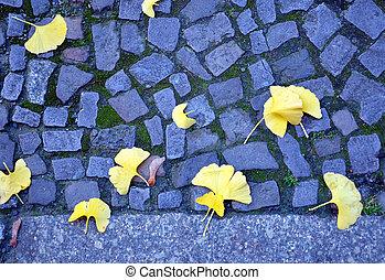 Ginkgo leaves on cobblestone street