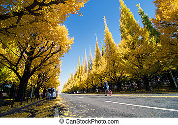 Ginkgo Tree Avenue heading down to the Meiji Memorial Picture Gallery, Tokyo, Japan