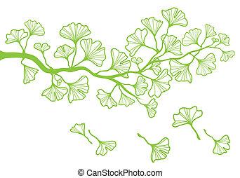 ginkgo, vecteur, branche, feuilles