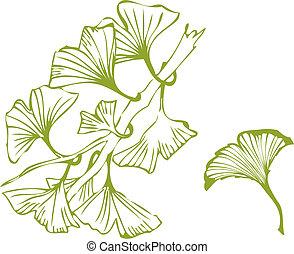 ginko, hojas
