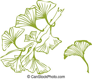 ginko leaves - vector illustration
