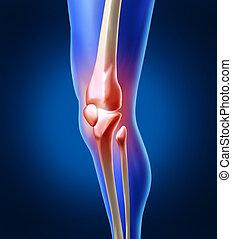 ginocchio, dolore, umano