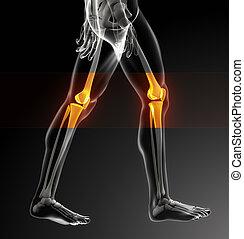 ginocchio, umano, scansione