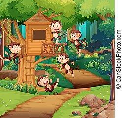 gioco, scimmie, treehouse