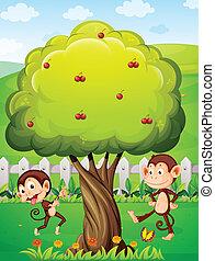 gioco, sotto, albero, due, scimmie