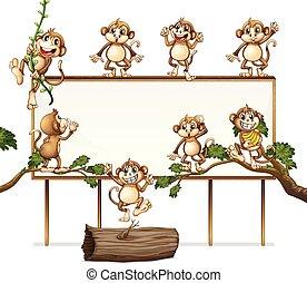 giocoso, asse, scimmia, segno bianco