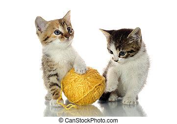 giocoso, gattini