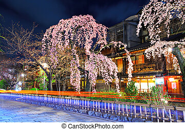 Gion city with sakura tree at night