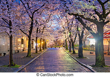 Gion Shirakawa, Kyoto, Japan during cherry blossom season at...
