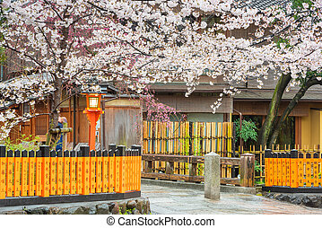 Gion Shirakawa, Kyoto, Japan in Spring - Gion Shirakawa, ...
