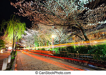 Gion with sakura trss at night
