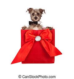 giorno valentines, cane, presente