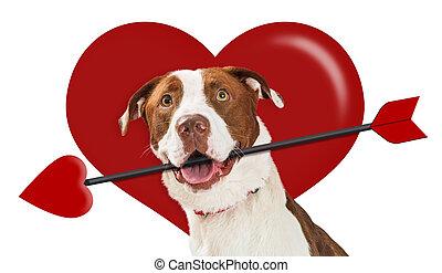 giorno valentines, cuore, cupido, cane
