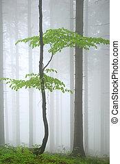 giovane, albero verde, in, foresta densa, nebbia