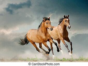 giovane, cavalli