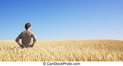 giovane, in, campo frumento