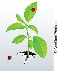 giovane, pianta verde, e, coccinella