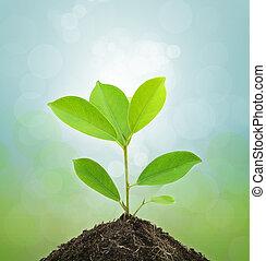 giovane, pianta verde, e, suolo, su, verde, fondo.