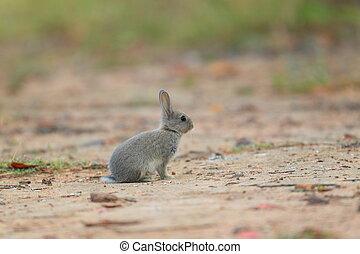 giovane, poco, coniglio, in, il, prato