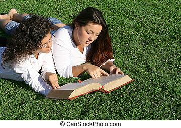 giovani donne, lettura, a, bibbia, campeggiare, o, gruppo studio