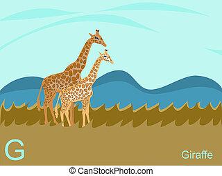 girafa, alfabeto, g, animal