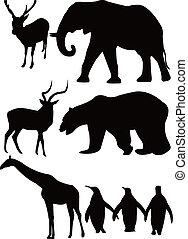 girafe, cerf, éléphant, ours, manchots