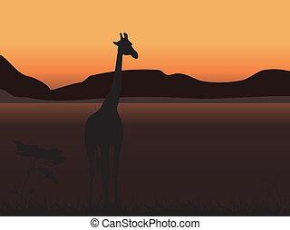 girafe, coucher soleil, fond