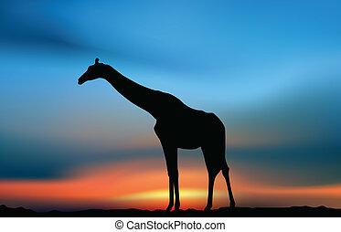 girafe, coucher soleil