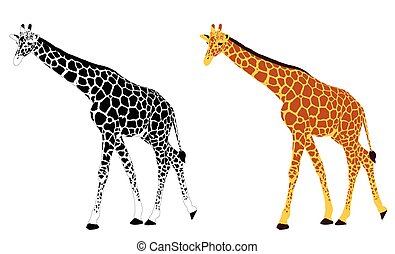 girafe, illustration