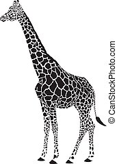 girafe, noir blanc, vecteur