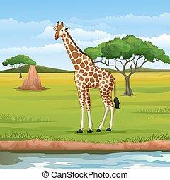 girafe, savane, dessin animé