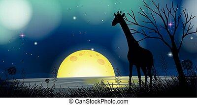 girafe, silhouette, scène, fond, nuit