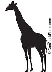 girafe, silhouette