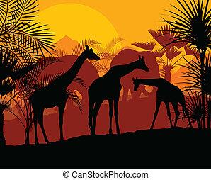 girafe, vecteur, coucher soleil, fond
