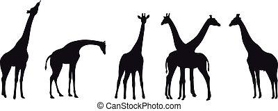 Girafe vector